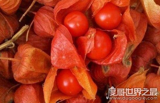 哥伦比亚龙珠果竟然是它,一种原产于中国的神奇酸浆果