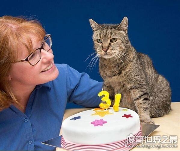 世界上最长寿猫咪,有一只猫活了38岁(相当于人144岁)