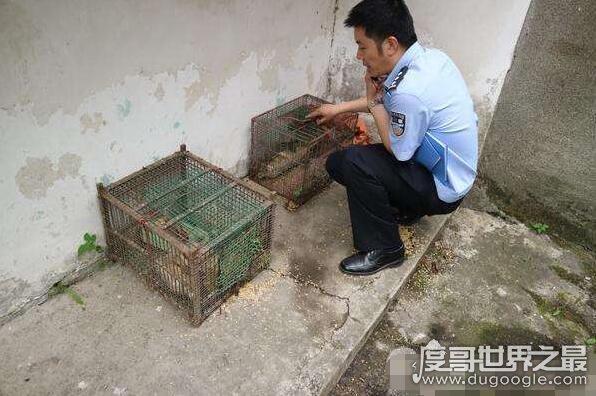 偷运麻雀被罚 男子偷运麻雀被罚39600元,用二级保护动物诱捕猫也是奇葩