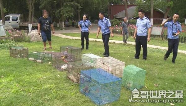男子偷运麻雀被罚39600元,用二级保护动物诱捕猫也是奇葩