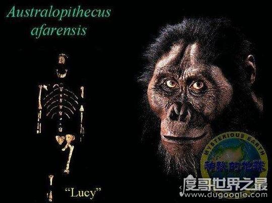世界上第一个猿人露西,这个直立行走的先驱者竟然是摔死的