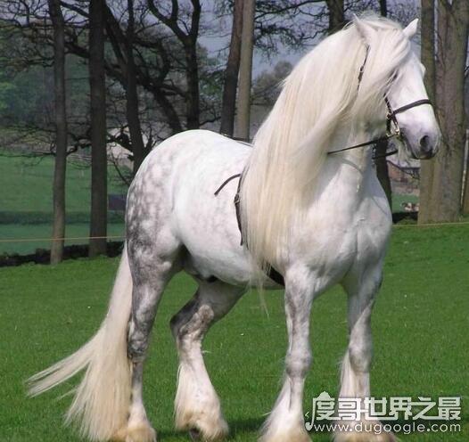 十大世界上體型最漂亮的馬,每一種都是讓人移不開眼的駿馬