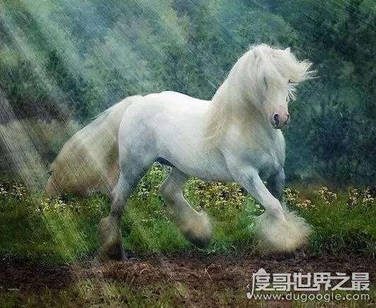 十大世界上体型最漂亮的马,每一种都是让人移不开眼的骏马