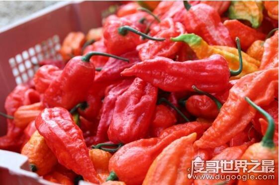 中国最辣的辣椒,云南涮涮辣(挑战者都已被辣疯)