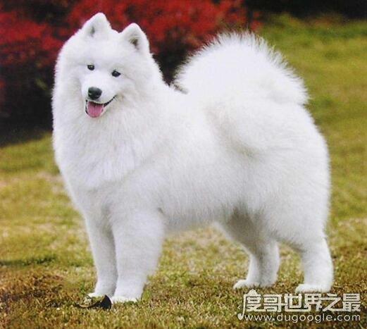 欧冠万博官网登陆最笨的狗排名,看看自家蠢萌的狗狗有没有上榜吧