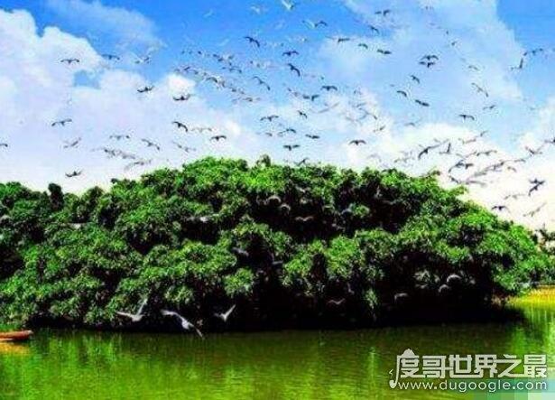 中国十大千年古树排名,第一古树黄帝轩辕柏(5000年历史)