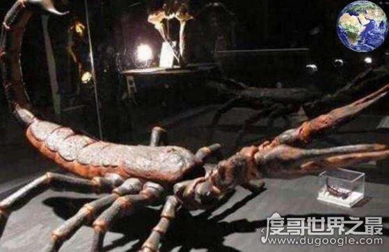 史前最大蝎子,布龙度蝎子(光是毒刺就有拳头那么大)