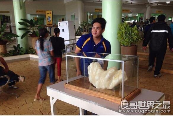 世界上最大的珍珠,菲律宾产出重68斤珍珠王(价值1亿美元)