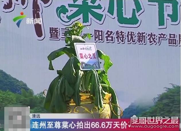 """关于蔬菜的吉尼斯纪录,""""最贵菜心""""66万(最大南瓜重1吨)"""