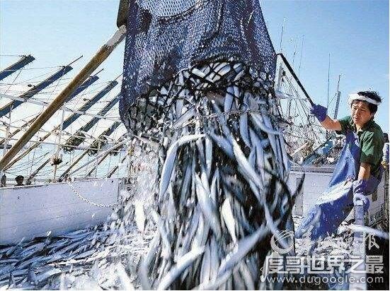 世界上最大的渔场,日本北海道渔场(世界四大渔场排行)