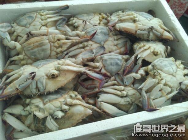 螃蟹死了能不能吃了?并不能吃(吃了可能会引发食物中毒)