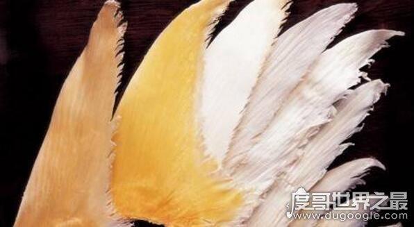 中国四大海味,鱼翅/鲍鱼/鱼肚/海参(有钱人的美食)