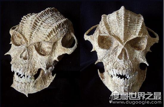 俄出土奇怪头骨,椭圆形的头骨疑是外星人遗留下来的