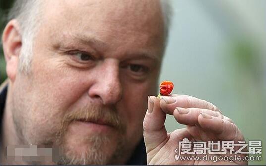世界上最辣的辣椒,龙吐气辣度248万(比死神辣椒更恐怖)