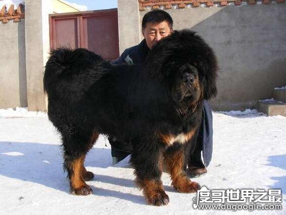 世界上最贵的宠物,这几种宠物最便宜的土豪都不一定买得起
