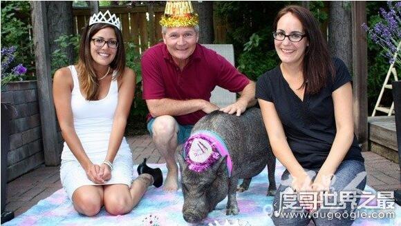 关于猪的大众彩票投注网站盘点,世界上寿命最长的猪是23岁(图)