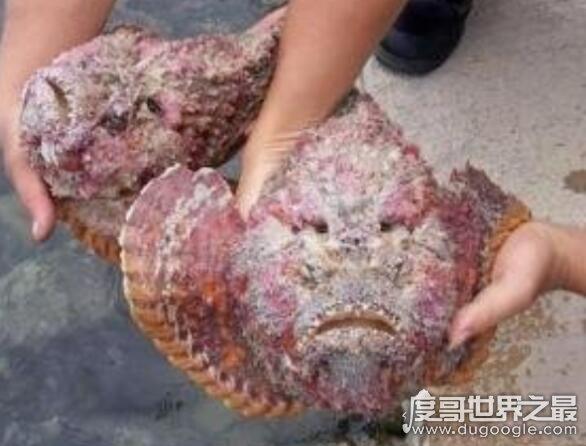 世界十大人面动物,动物身体和人脸的组合看起来超恐怖
