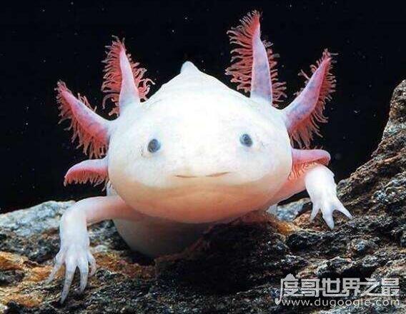 世界十大人面动物,动物身体和人脸的组合看起来超恐怖(hbqng.com)