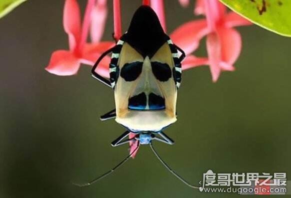 世界十大人面动物,动物身体和人脸的组合看起来超恐怖(www.souid.com)