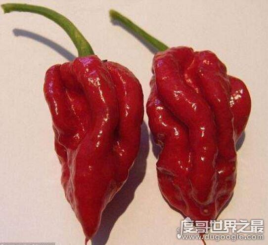 """世界上最辣的辣椒,地獄之火辣到人""""自燃""""(真實性帶考證)"""