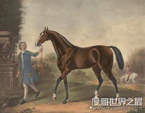 世界上跑的最快的馬是英國純血馬,時速68KM堪比汽車