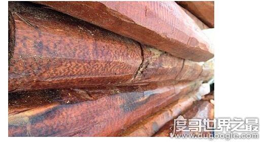 世界上最名贵的木材,蛇纹木高公斤100美元以上