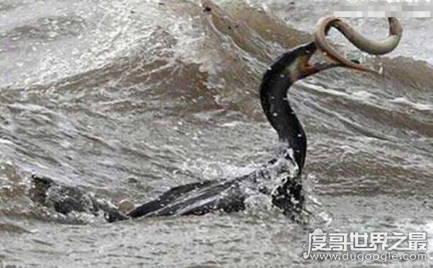 欧冠万博官网登陆水怪图片,喀纳斯湖水怪力大无穷