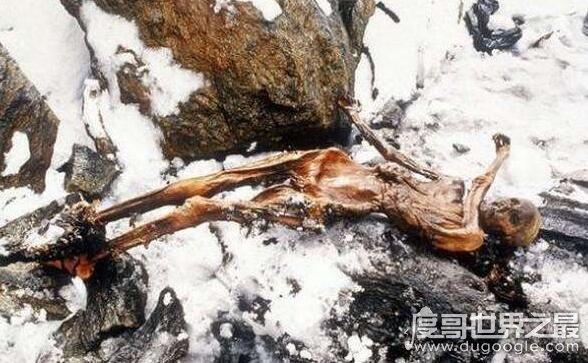 冰人奥兹5300年前死于谋杀,曾有6名接触他的研究者先后死亡