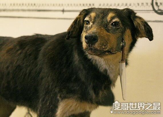 巴甫洛夫的狗,这个实验形容一个人条件反射反应不经大脑思考