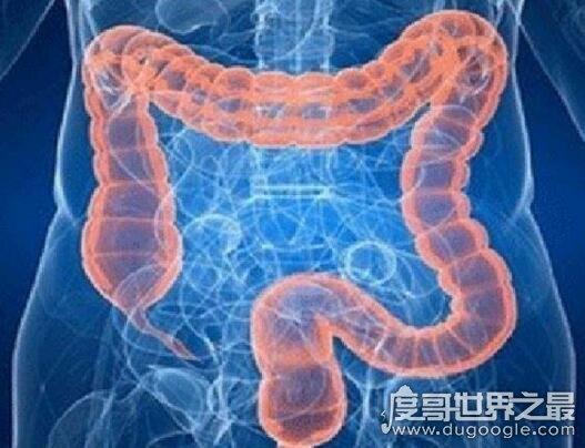 人的肠子有多长?一般在6.5-8.5米之间(附肠道计算公式)