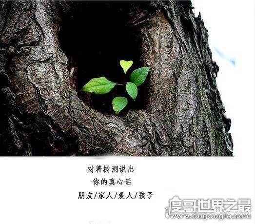 倾诉的意思_树洞什么意思?比喻隐藏/秘密/倾诉的对象(可以坦露心声的地方 ...