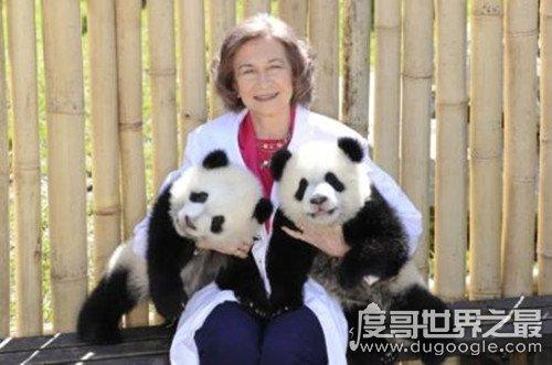 大熊猫为什么被视为中国的国宝,数量稀少中国独有(动物界的活化石)