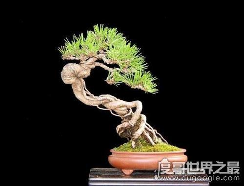 五大最旺宅的植物,发财树当之无愧第一(寓意聚财纳福)