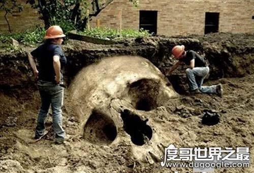世界第一巨人竟高5米,一个头骨就比人大(谣言勿信)