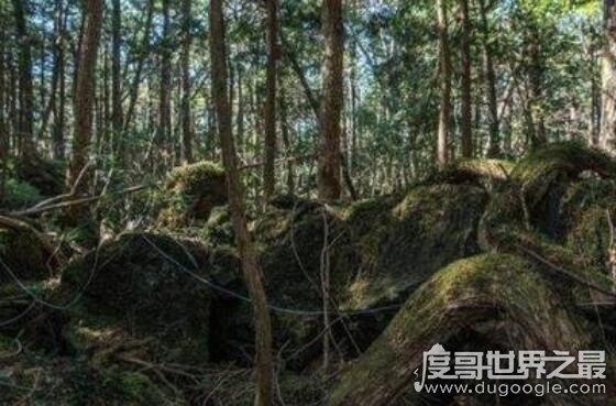 世界最恐怖的森林,超500人在这里自杀,指南针都毫无效果(www.souid.com)