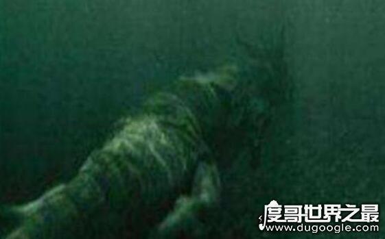 2019长江真龙事件,一点事实依据都没有(绝对是谣言)
