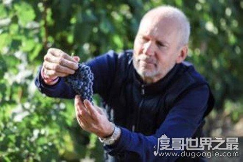 中国种植葡萄始于什么朝代,西汉武帝时期(由张骞出使西域带回)