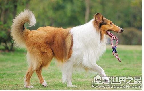 狗尾续貂的意思和典故,比喻将不好的东西续接在好东西的后面