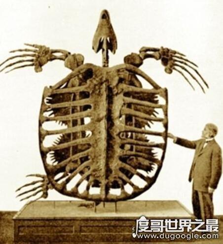 地球史上最大乌龟,古巨龟(长4.1米/宽4.9米/重达2200公斤)