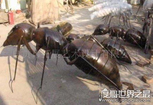 世界上毒性最强的蚂蚁,子弹蚁叮咬像子弹击中(疼痛指数第一)(www.souid.com)
