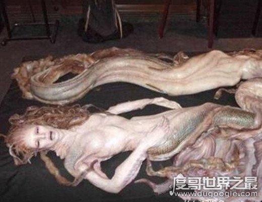 1962年活鲛人图片,面目狰狞身似人尾似鱼(假新闻)