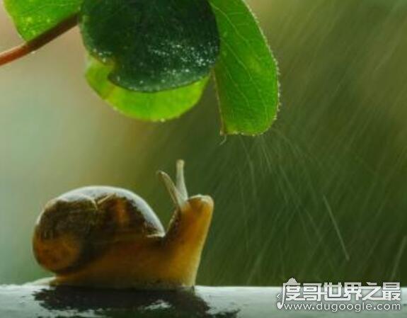 什么动物会夏眠?夏眠的动物大盘点(松鼠蜗牛都会夏眠)