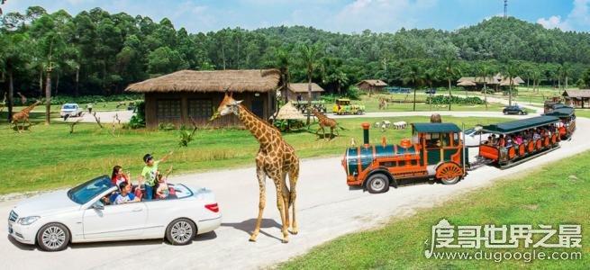 中国最大的野生动物园,广州长隆野生动物世界(有2万余只动物)