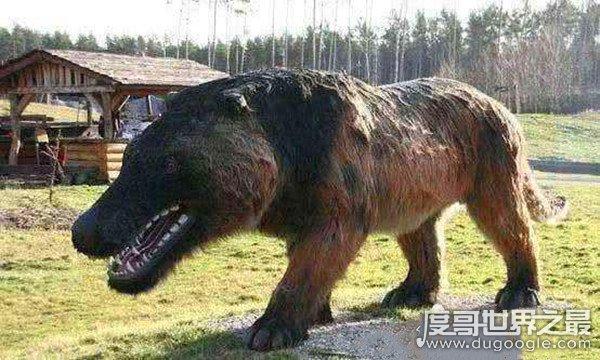 驴头狼的真实图片,神农架曾传出过驴头狼出没的消息