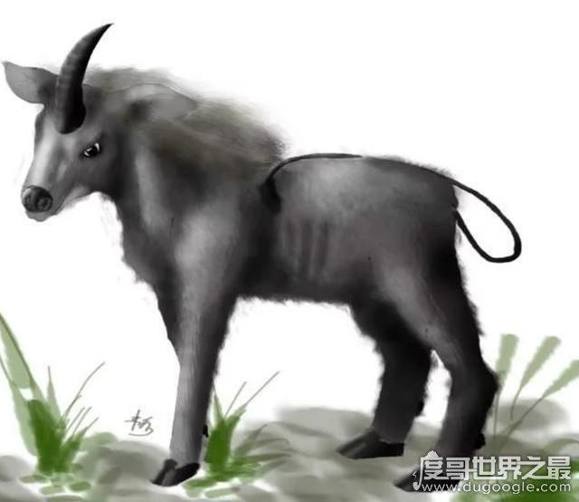 神农架棺材兽真的存在吗,传说长得像牛头马面(至今未证实)