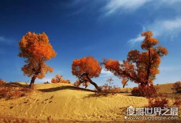 胡杨林在什么地方,主要分布在中国西北大漠(三大胡杨林介绍)