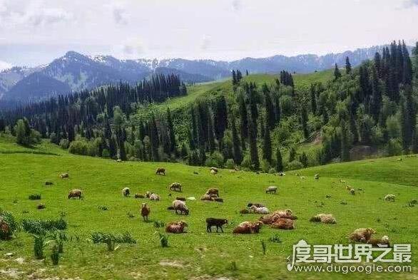 世界上人工造林最多国家,中国每年人工造林超过7000万亩