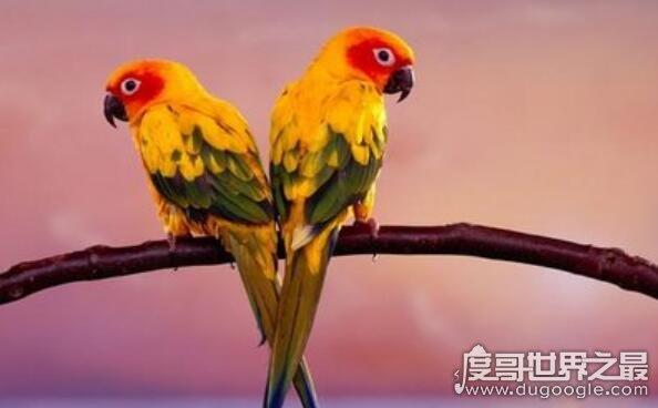 什么鸟寿命最长,亚马逊鹦鹉平均寿命80岁(最长寿命104岁)