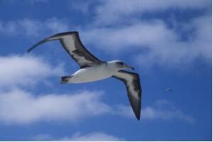 世界上最能飞的鸟,信天翁(一生飞行600万公里可绕地球150圈)