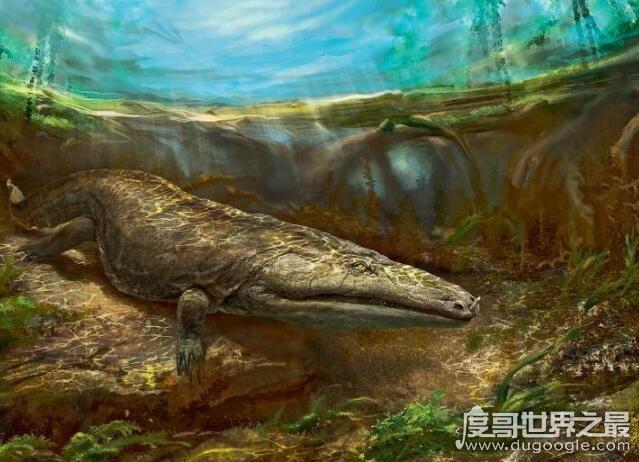 史前最大的青蛙,虾蟆螈(长达5米/竟以恐龙为食)